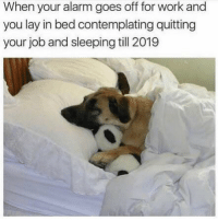 Funny, Memes, and Work: When your alarm goes off for work and  you lay in bed contemplating quitting  your job and sleeping till 2019 SarcasmOnly