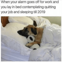 Work, Alarm, and Sleeping: When your alarm goes off for work and  you lay in bed contemplating quitting  your job and sleeping till 2019 Who needs a job anyway?
