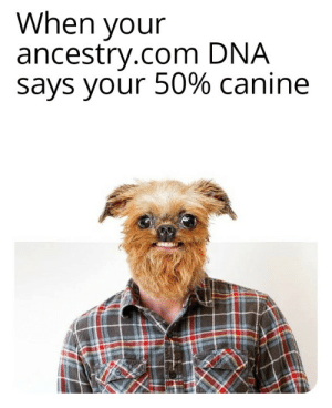 Ancestry, Dank Memes, and Dna: When your  ancestry.com DNA  says your 50% canine Woof