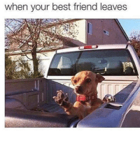 Best Friend, Funny, and Best Friends: when your best friend leaves