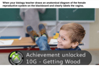 """Memes, Teacher, and Blackboard: When your biology teacher draws an anatomical diagram of the female  reproductive system on the blackboard and clearly labels the vagina.  Achievement unlocked  10G Getting Wood <p>Any potential in &lsquo;getting wood&rsquo; memes? via /r/MemeEconomy <a href=""""http://ift.tt/2uEbQbe"""">http://ift.tt/2uEbQbe</a></p>"""