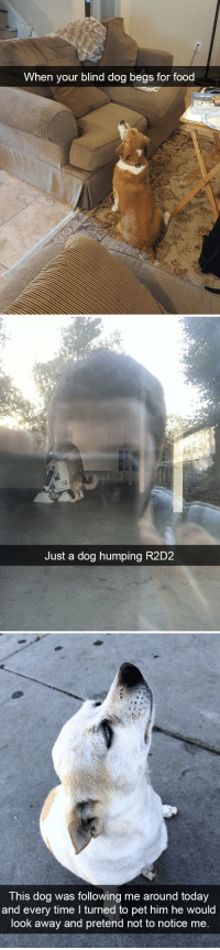 animalsnaps:Dog snaps: When your blind dog begs for food   Just a dog humping R2D2   T his dog was following me around today  and every time I turned to pet him he would  look away and pretend not to notice me animalsnaps:Dog snaps