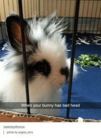 When your bunny has bed head  tasteful  ffensive  photo by angela tom)