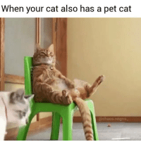 When your cat also has a pet cat! @chaos.reigns_: When your cat also has a pet cat  @chaos reigns When your cat also has a pet cat! @chaos.reigns_