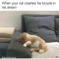 Memes, Bicycle, and 🤖: When your cat crashes his bicycle in  his dream  @NaturelsAmazing
