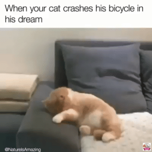 : When your cat crashes his bicycle in  his dream  @NaturelsAmazing