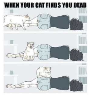 meirl: WHEN YOUR CAT FINDS YOU DEAD meirl