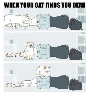 Girl with cat: WHEN YOUR CAT FINDS YOU DEAD  wwnmes  caer Girl with cat