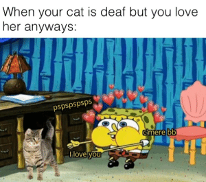 She might feel it from her heart: When your cat is deaf but you love  her anyways:  pspspspsps  cmere bb  Ilove you She might feel it from her heart