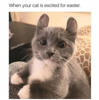 Are you excited as well? 🐰🐱: When your cat is excited for easter. Are you excited as well? 🐰🐱