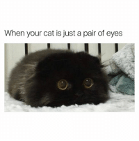 Cute, Funny, and Memes: When your cat is just a pair of eyes @drsmashlove has cute memes