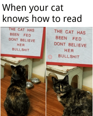 When your cat knows how to read: When your cat knows how to read