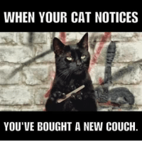 Couch: WHEN YOUR CAT NOTICES  YOU'VE BOUGHT A NEW COUCH.