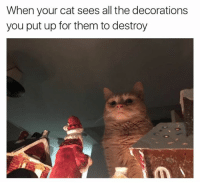 """""""Bow down, Santa"""": When your cat sees all the decorations  you put up for them to destroy """"Bow down, Santa"""""""