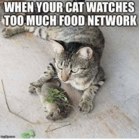 All he needs is some hot sauce.: WHEN YOUR CAT WATCHES  TOO MUCH FOOD NETWORK All he needs is some hot sauce.