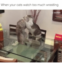 Ding ding ding 😹😹: When your cats watch too much wrestling  news flare Ding ding ding 😹😹