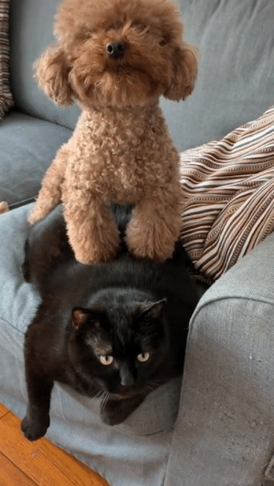 Dank, 🤖, and Dog: When your dog and your cat switch personalities