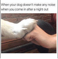 Dog, One, and Make: When your dog doesn't make any noise  when you come in after a night out He a real one 😂💯 https://t.co/etkoZD4BsQ