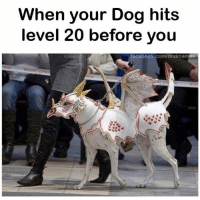 Facebook, Funny, and Animal: When your Dog hits  level 20 before you  facebook.com/dndmemes 24 Funny Animal Pictures To Distract You From Whatever You're Supposed To Be Doing