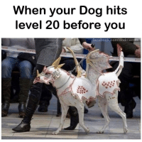 Memes, Dog, and Com: When your Dog hits  level 20 before you  tacebook.com/ddndmemes Dog powered up via /r/memes https://ift.tt/2G0eu1c