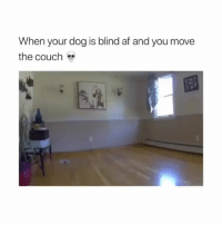 Af, Memes, and Couch: When your dog is blind af and you movee  the couch  5a Dog is fine via @brandonruiz