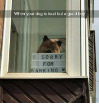 Sorry, Good, and Humans of Tumblr: When your dog is loud but a good bo  SORRY  FOR