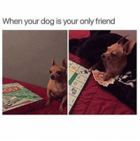 Ass, Bitch, and Funny: When your dog is your only friend Bitch ass bought Boardwalk and Park Place