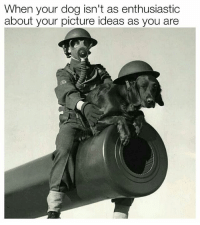 Memes, 🤖, and Ww2: When your dog isn't as enthusiastic  about your picture ideas as you are ww1 worldwars ww2 gasmask dogsofinstagram takingpictureswithyourdog