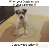 RIP 🔫💣 Must Watch 😂😂 @ommy_007 . . Love laughter comedy funny memes videooftheday cute happy fun smile instamood amazing bestoftheday Follow for crazy meme vine troll enjoy hilarious video: When your Dog joins you  in your Bakchodi 6  Cutest video today  With  iva Video RIP 🔫💣 Must Watch 😂😂 @ommy_007 . . Love laughter comedy funny memes videooftheday cute happy fun smile instamood amazing bestoftheday Follow for crazy meme vine troll enjoy hilarious video
