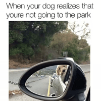 Memes, Pup, and 🤖: When your dog realizes that  youre not going to the park  @dogs  asic You have betrayed me. Pup @graysongrowsup