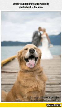 srsfunny:Proud Photobomber: When your dog thinks the wedding  photoshoot is for him...  BUTTERFLY PHOTOGRA  www.butterflyphotography.ca  THE META PICTURE srsfunny:Proud Photobomber