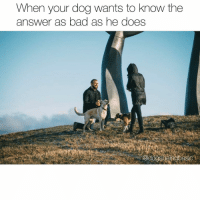 Af, Bad, and Dogs: When your dog wants to know the  answer as bad as he does  @doospenebasio I usually separate myself and personal life from this account for many reasons, but that being said our dogs are such a big part of our lives and even our proposal! Our story was just featured in @howheasked. (Link in bio) two days from now we get married and Willard and Jaxon officially become brothers(that's all you guys care about). I won't get super sappy here but we're excited. There will likely be less posting for a few days, but photos of dogs in the wedding are SURE TO COME. Let's just be pumped AF that two doggos will soon officially be bros. Photo @justinjenny