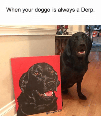 @popyourpup is an amazing place: When your doggo is always a Derp  popyourpup @popyourpup is an amazing place