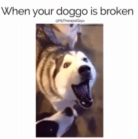 doggo: When your doggo is broken  (a MyTherapistSays