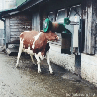 9gag, Memes, and 🤖: When your friend caught you doing silly things again By @hofhabsburg cow brushie 9gag
