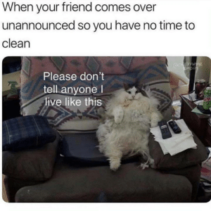 Memes, Live, and Time: When your friend comes over  unannounced so you have no time to  clean  Please don't  tell anyone l  live like this