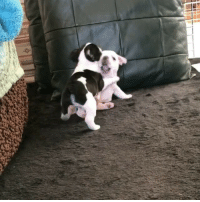 When your friend does something embarrassing and you pretend that you don't know him. Follow @9gag🐶 App📲👉@9gagmobile 👈 9gag instadog (📹 @eight_bom) frenchie babyanimals cute kawaii dogofinstagram frenchbulldog: When your friend does something embarrassing and you pretend that you don't know him. Follow @9gag🐶 App📲👉@9gagmobile 👈 9gag instadog (📹 @eight_bom) frenchie babyanimals cute kawaii dogofinstagram frenchbulldog