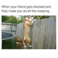 Memes, Wshh, and All The: When your friend gets blocked and  they make you do all the creeping... Tag a friend that you've done this for! 👇😩 WSHH