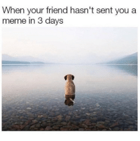 Meme, Memes, and Been: When your friend hasn't sent you a  meme in 3 days Tag a friend that's been MIA.. @chaos.reigns_ for more @chaos.reigns_ @chaos.reigns_