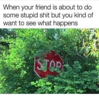 Shit, MeIRL, and Friend: When your friend is about to do  some stupid shit but you kind of  want to see what happens Meirl