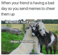 Bad, Bad Day, and Memes: When your friend is having a bad  day so you send memes to cheer  them up  Whomst hurt yoU  0  doggo herenow