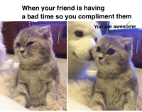 "Bad, Http, and Time: When your friend is having  a bad time so you compliment them  You are awesóme <p>Wholesome boop via /r/wholesomememes <a href=""http://ift.tt/2y1vxv7"">http://ift.tt/2y1vxv7</a></p>"