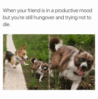 Chill, Funny, and Mood: When your friend is in a productive mood  but you're still hungover and trying not to  le Could you freakin chill Jessica😳 Via @humor_me_pink
