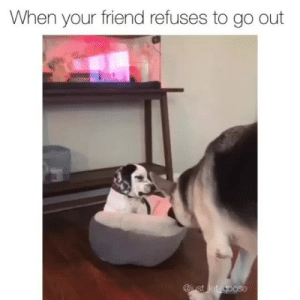 You're coming with me!Pup @just_let_gooseVia @sydneyobe: When your friend refuses to go out  @iust let goose You're coming with me!Pup @just_let_gooseVia @sydneyobe