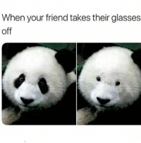 Funny, Memes, and Best: When your friend takes their glasses  off @donut posts the best memes