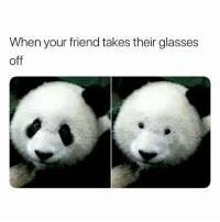 @hilarious.ted is by far the funniest animal memes page 😂: When your friend takes their glasses  off @hilarious.ted is by far the funniest animal memes page 😂