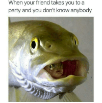 Memes, 🤖, and Weeds: When your friend takes you to a  party and you don't know anybody Awe fishy fish Ha ha. I'm weak flatlined dead pettypost nochill teamnoharmdone dogs cat vape fitspiration funny funnymemes savage savagememes dankmemes gymmotivation fitnessmotivation weed weedhumor hollywood celebrity fashion model college fail