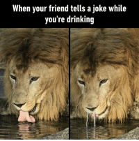 9gag, Bad, and Drinking: When your friend tells a joke while  you're drinking Bad timing, dude⠀ By mame_nek0 | TW⠀ -⠀ joke lion friend 9gag
