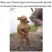 Memes, Left Behind, and 420 Weed: When your friend trying to let the promoter get y'all  in the party free so you just stand behind them like  Carib  on Just gotta act normal and stay close 👀 or else your ass might get left behind! 👌 . . . . . cringe savage caribbeancomedy hoodcomedy rekt triggeredmemes 420 weed dank cod lit harambe boi leafy party memes dankmeme dankmemes nochill savage bruh comedy murica hillarious funny triggered f4f trump clowns