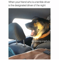 But did you die?: When your friend who is a terrible driver  is the designated driver of the night  menotgivingafuck But did you die?